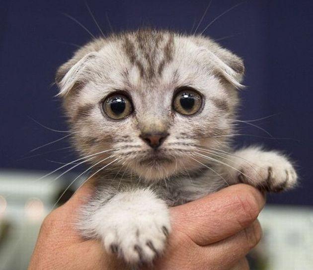 Kastracija mačaka – da ili ne?