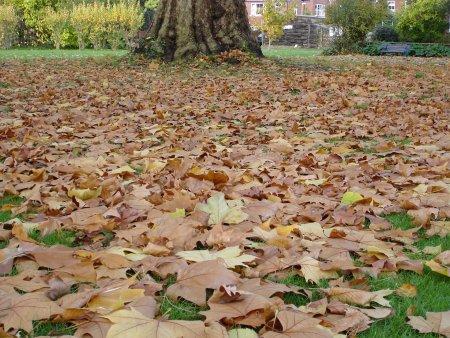 Ostavite lišće na tlu