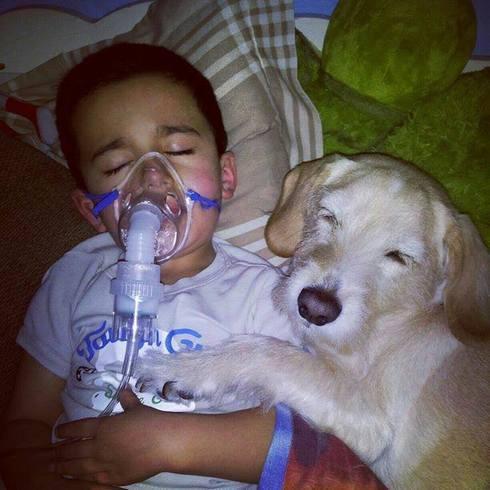 Bolesno dijete i brižan pas