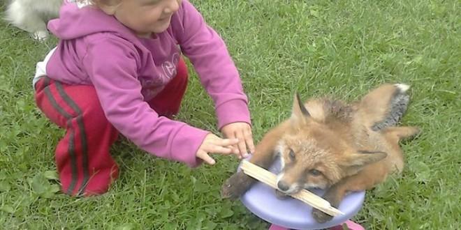 Šokantno: Fotografirao psa kako ubija zavezanu lisicu!