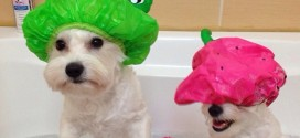 Učinite kupanje psa zabavnim i lakim