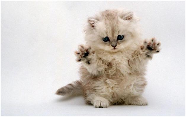 Liječenje bolesne mačke