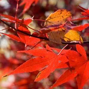 Zaštitite vrt u jesen