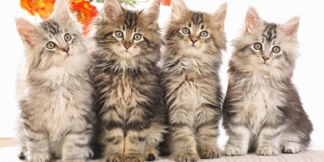 Poznati i mačke