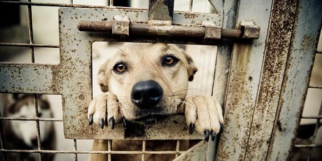 Kome prijaviti zanemarenu / povrijeđenu životinju?