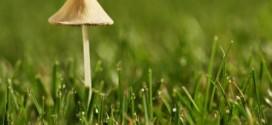 Gljive u vrtu: Dobro ili loše?